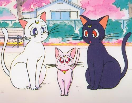 Картинки кошки аниме