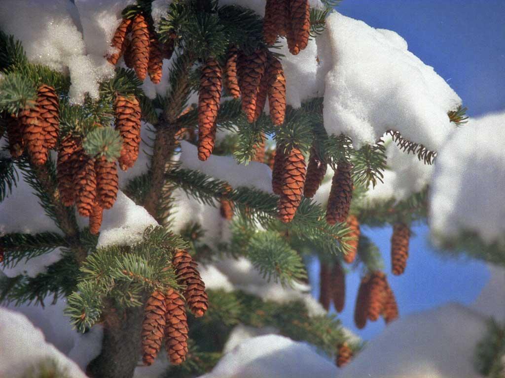 """Зимние пейзажи (подборка фото) """" CityBlack.ru - Интересные новости дизайн уроки программирование советы жизнь"""